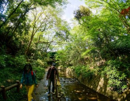 Golden Green Week! 新緑のゴールデンウィーク 等々力渓谷