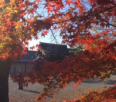 京都御所での幻想的風景 Autumn leaf in Kyoto Gosho