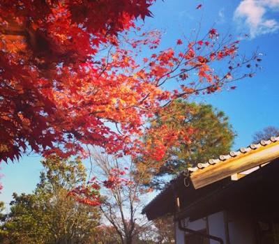 京都妙心寺での結婚式 Traditional Japanese wedding in a temple in Kyoto