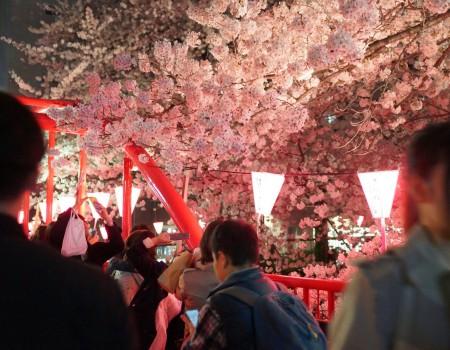 うっとり目黒川の夜桜!〜日本人が桜を愛する理由を聞かれたら〜