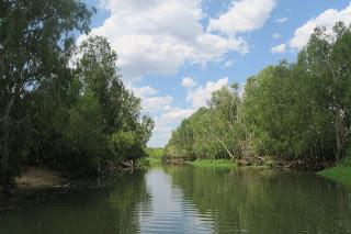 ワニに会っちゃった!Kakadu公園in オーストラリア Meeting Crocs in Northern Territory, Australia