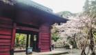 鎌倉 光明寺〜海辺をぷらぷら散歩 Walk around Kamakura: Sakura Komyoji temple and beach