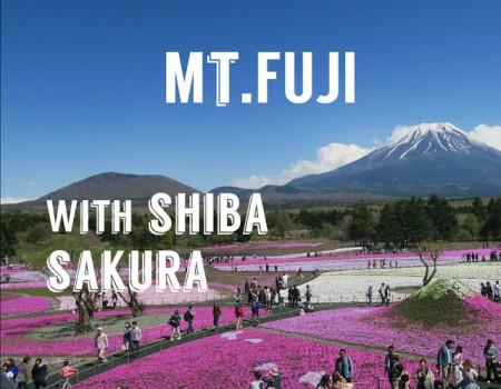 富士芝桜まつりにいってきた! Mt.Fuji with Shiba Sakura  !